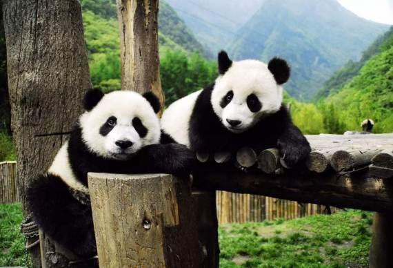 【慢游成都】熊猫基地 东郊记忆 黄龙溪 人民公园 宽窄巷子2~6人漫生活1日之旅