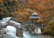 【喇叭河】万树枫叶红 满山层林染 美不胜收 雅安喇叭河2日游