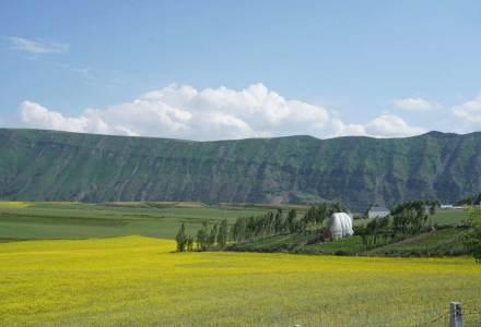 不到伊犁,不知新疆之美,伊犁美景得天独厚的自然风光,让人心生向往
