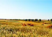 敦煌西湖国家级自然保护区旅游攻略-自驾游路况-门票交通天气景点介绍