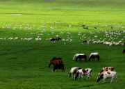 青海金银滩草原旅游攻略-自驾游路况-门票交通天气景点介绍