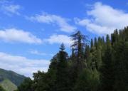 那拉提森林公园旅游攻略-自驾游路况-门票交通天气景点介绍