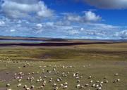 藏北草原旅游旅游攻略-自驾游路况-门票交通天气景点介绍